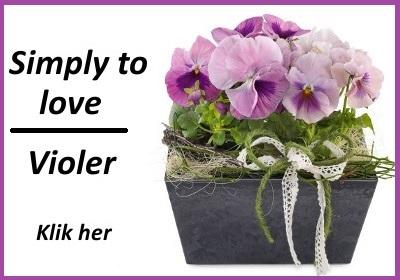 Sammenplantning med violer