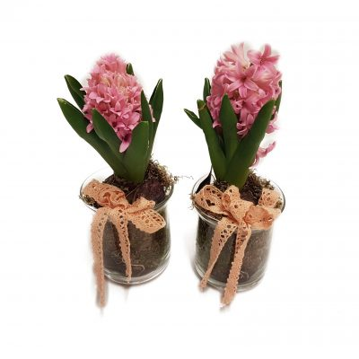 Fine hyacinter i glas