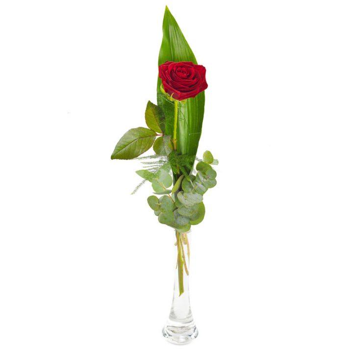 glamourøs rød rose