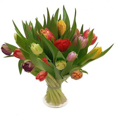 Festlige tulipaner