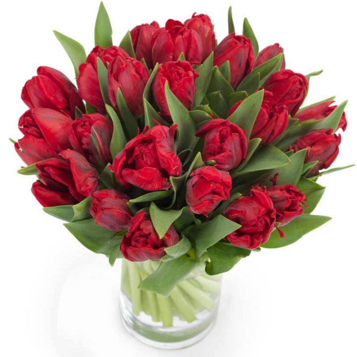 Sprøde røde tulipaner