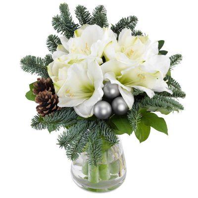 Sne hvid amaryllis