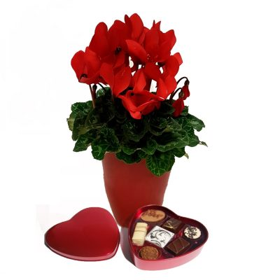 Blomst med chokolade