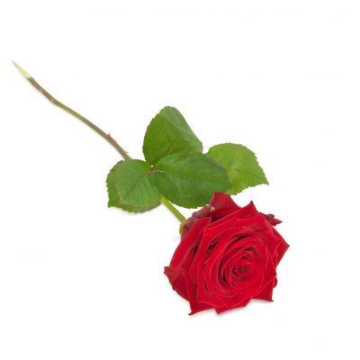 kasteroser, eller også kaldet ligge roser til at ligge på kisten når man tager afsked.