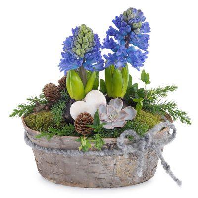 Forårsammenplantning med hyacinter