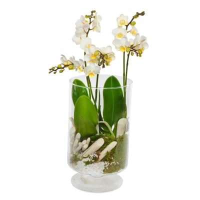 flot orkide i glas til levering eller udbringning