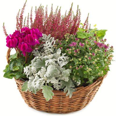 sammenplantning til levering, eller udbringning. i pink, lyserød og grønne nuancer