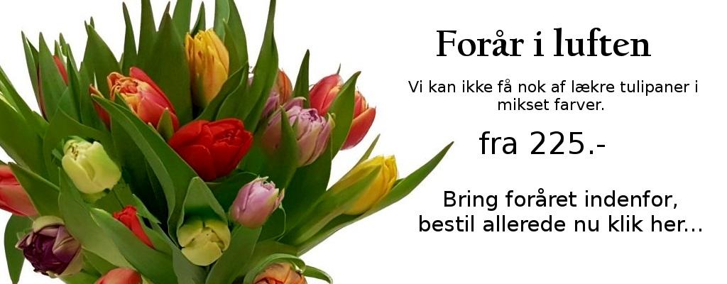 forside med tulipaner1